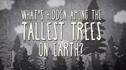 What's hidden among the tallest trees on Earth? - Wendell Oshiro